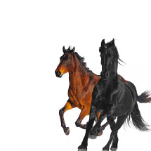 LIL NAS X FT. BILLY RAY CYRUS - OLD TOWN ROAD
